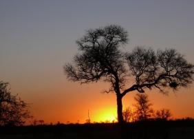 Sunset hinter Baum